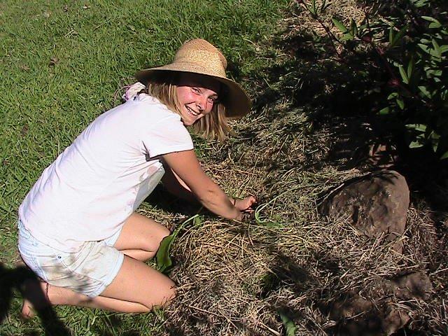 Weeding the garden beds