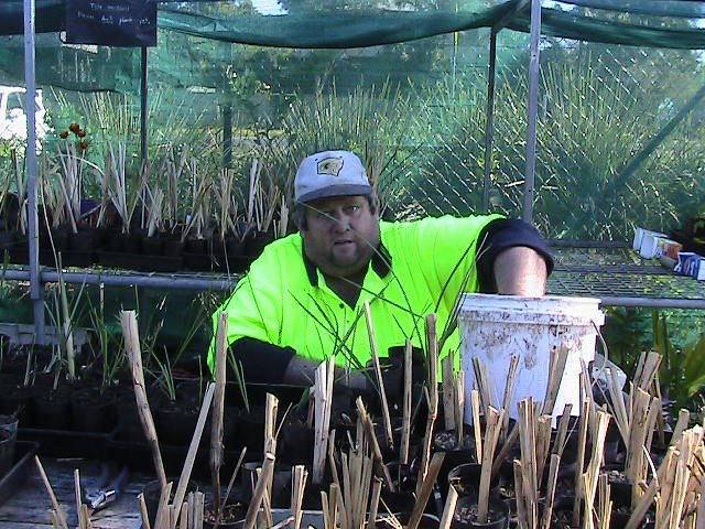 potting up grasses