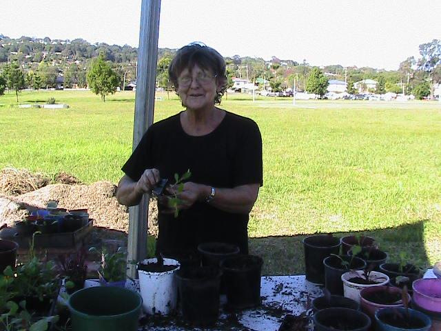 potting up seedlings